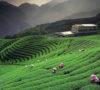 Luxuryvolt's top rates tea estate stays of India